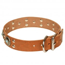Studded Leather Dog Collar with Silver-Like Adornment