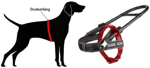 Führhundegeschirr fuer Labrador