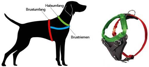 Wie Ihren Hund für dieses Geschirr (H1) zu messen