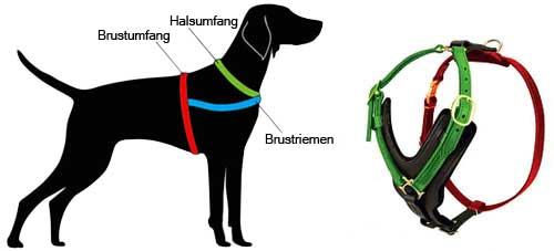 How to Measure the Dog for the Harness H10