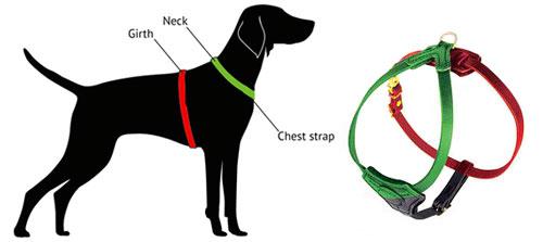 Wie einen Hund fuers Geshirr zu messen