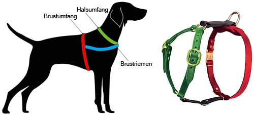 How to Measure the Dog for the Harness H7