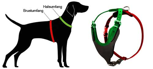 How to Measure the Dog for the Harness H8