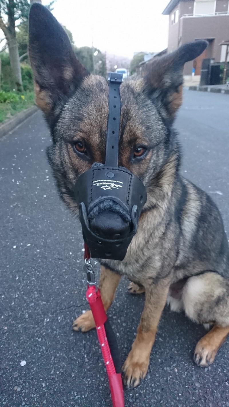 Hundemaulkorb bequem am Hundr