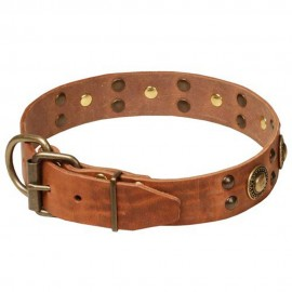 Amazing Decorative Leather Dog Collar for Labrador