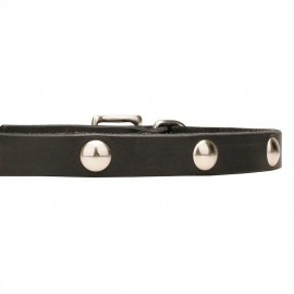 German Shepherd Puppy Collar, Leather, Half-Ball Studs