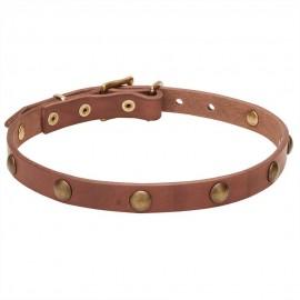 German Shepherd Puppy Collar Leather, Brass Hardware