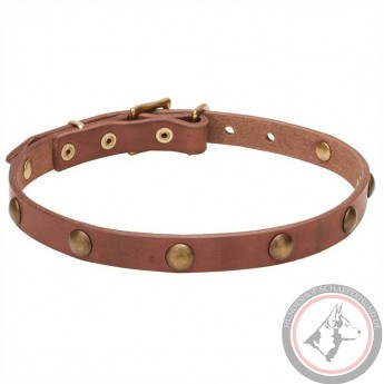 Extra Soft Narrow Leather Dog Collar with 1 Row Brass Studs
