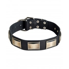 Wide Leather Dog Collar with Nickel Plates