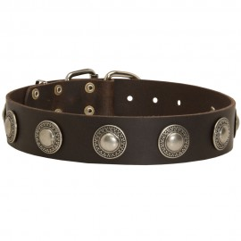 German Shepherd Collar of Leather with Brass Circles