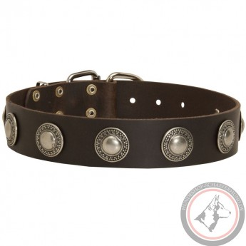 Leather Dog Collar with Nickel Conchos