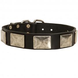 German Shepherd Collar, Large Nickel Plates, Leather