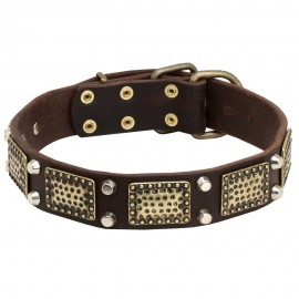 GSD Collar, Brass Plates, Nickel Cones, Quality Leather