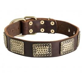 German Shepherd Collar, Curved Brass Plates, Leather