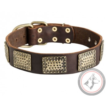 Leather Dog Collar with Vintage Brass Plates