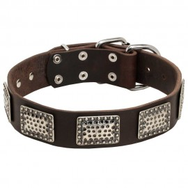 German Shepherd Collar, Leather, Curved Nickel Plates