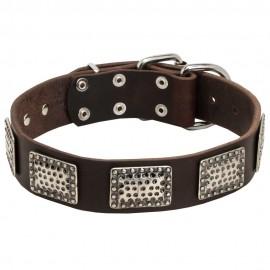 Hundehalsband Leder mit massiven Nickel Platten für Schäferhund