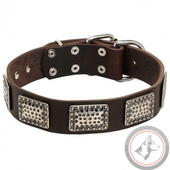 Leather Dog Collar with Massive Nickel Plates