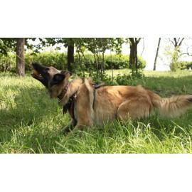 Hundeball aus Gummi für Schaeferhunde
