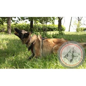 Greller Hundeball aus Gummi für Labrador mit angenehmem Geruch