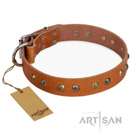 "German Shepherd Collar FDT Artisan Tan ""Golden'n'Silver Luxury"""