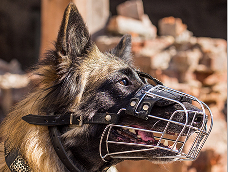 Schaeferhund MAULKORB