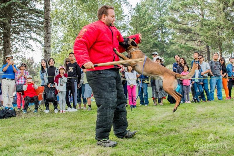 Hunde weltmeisterschaft 2020 ipo