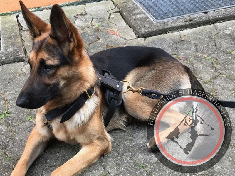 sicheres Leder Hundegeschirr