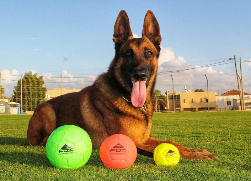 Hundespielzeug Ball für Fussball mit dem Hund