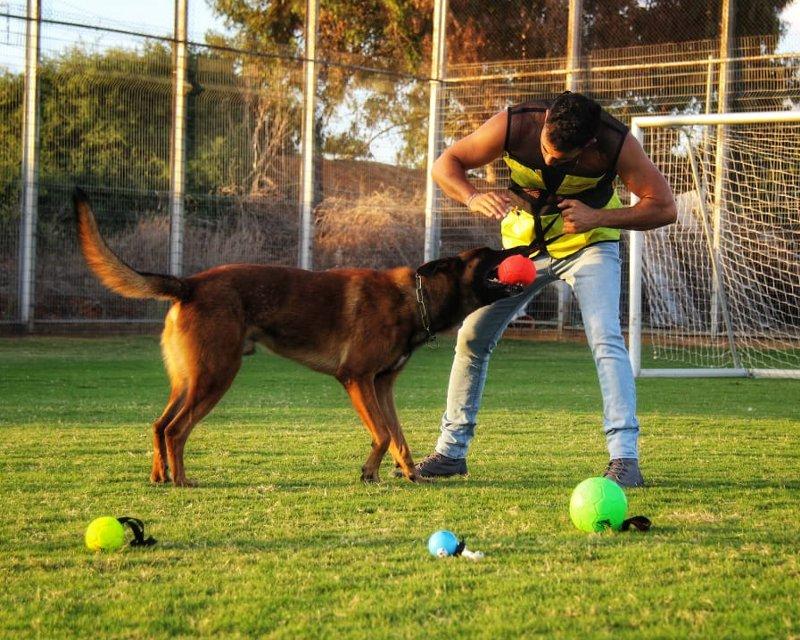 Balll für Fussball Spielen mit dem Hund kaufen