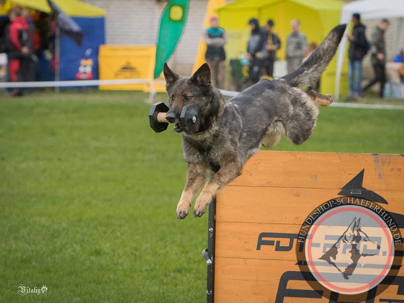 Hürde für Agility mit Hund