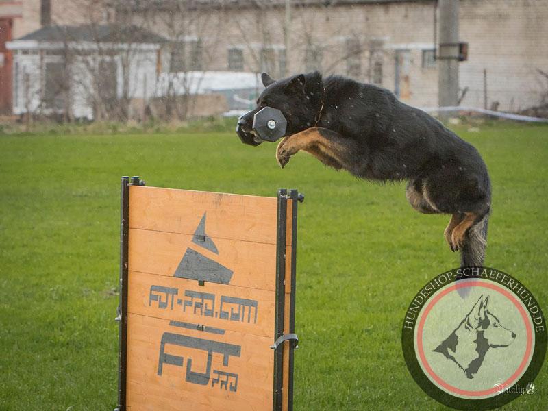 Hundeausrüstung für Training