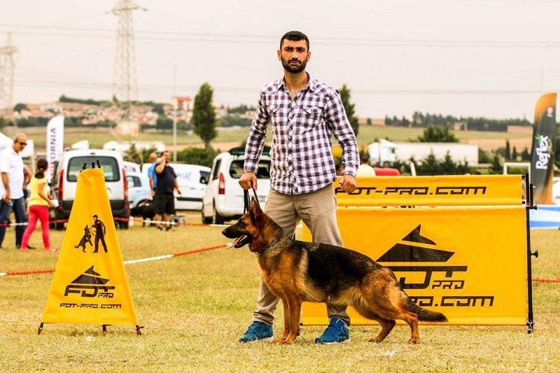 Hürde für Training mit Hund