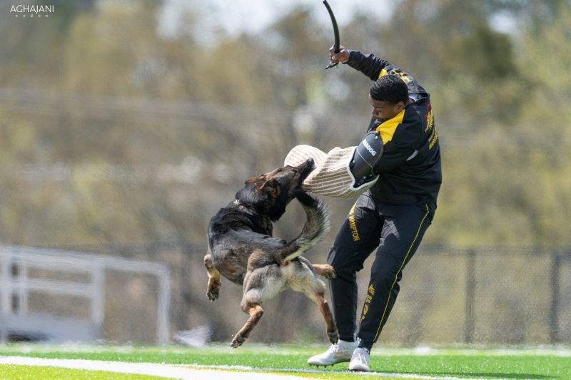Hetzanzug für Schutzhund-Training