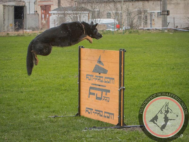 Verstellbare Sprunghürde für Hundesport