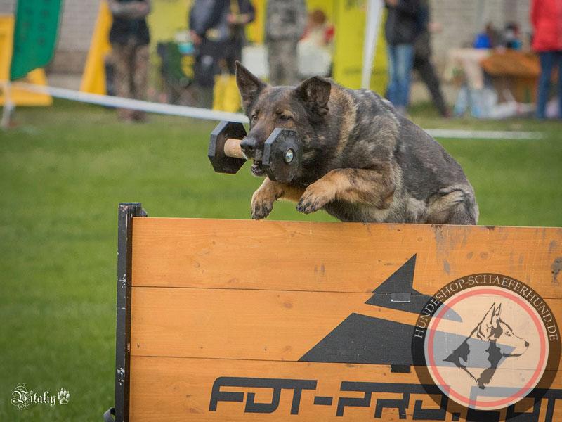 Hürde für Training mit dem Hund
