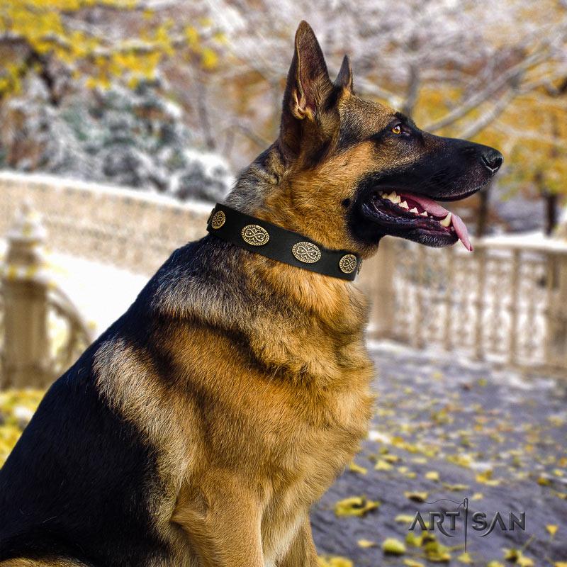 Schwarzes Nieten Lederhalsband für Schäferhunde