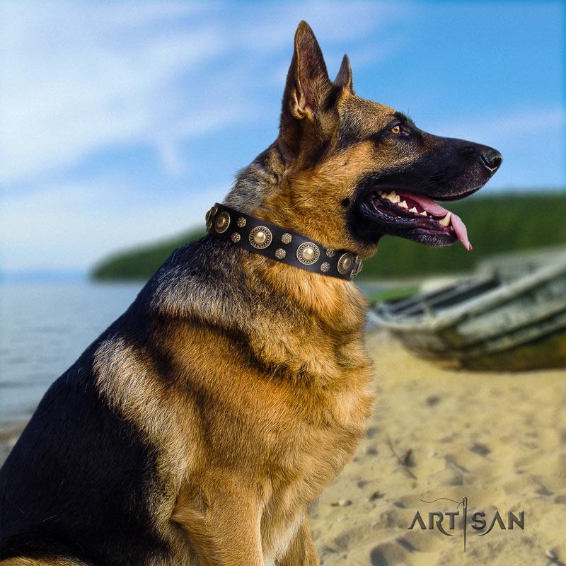 Schwarzes Halsband mit Nieten für Deutschen Schäferhund