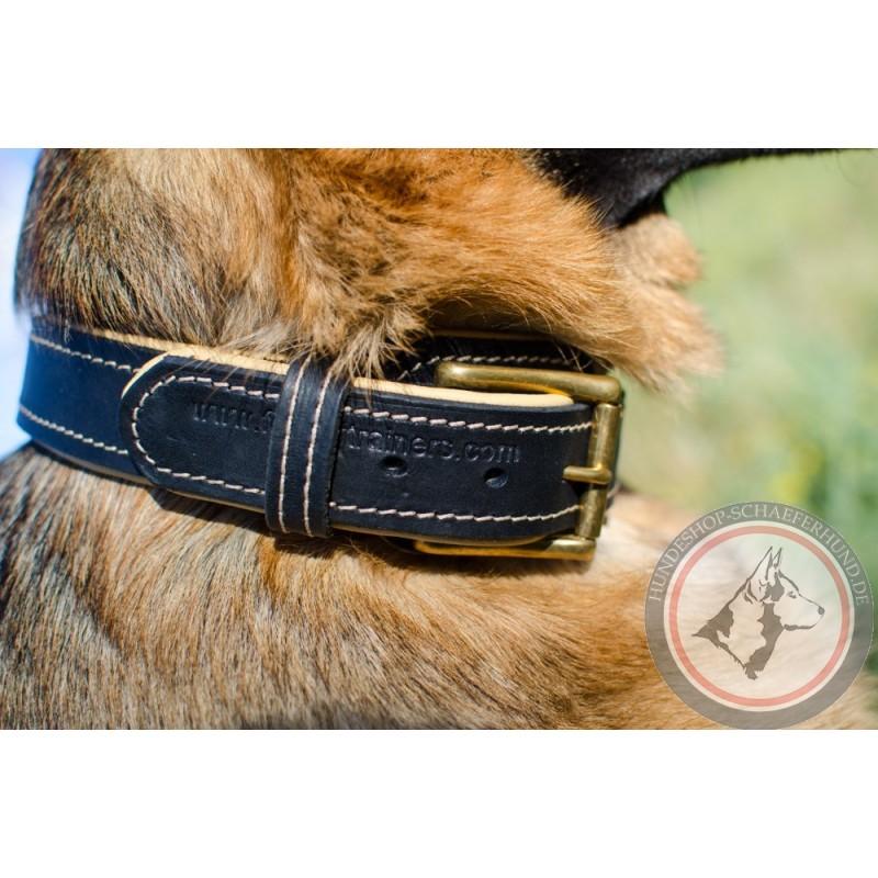 Hundehalsband aus Echtleder für Schäferhund kaufen