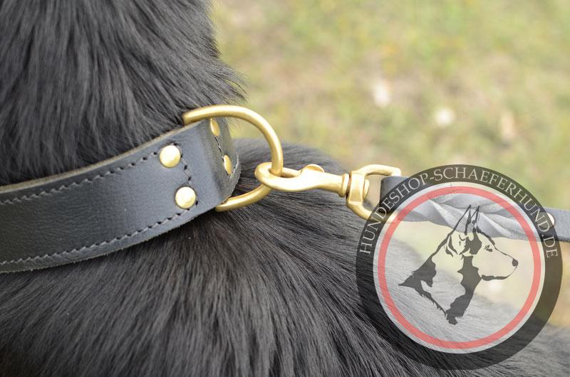 Leder Hundehalsband für Sport