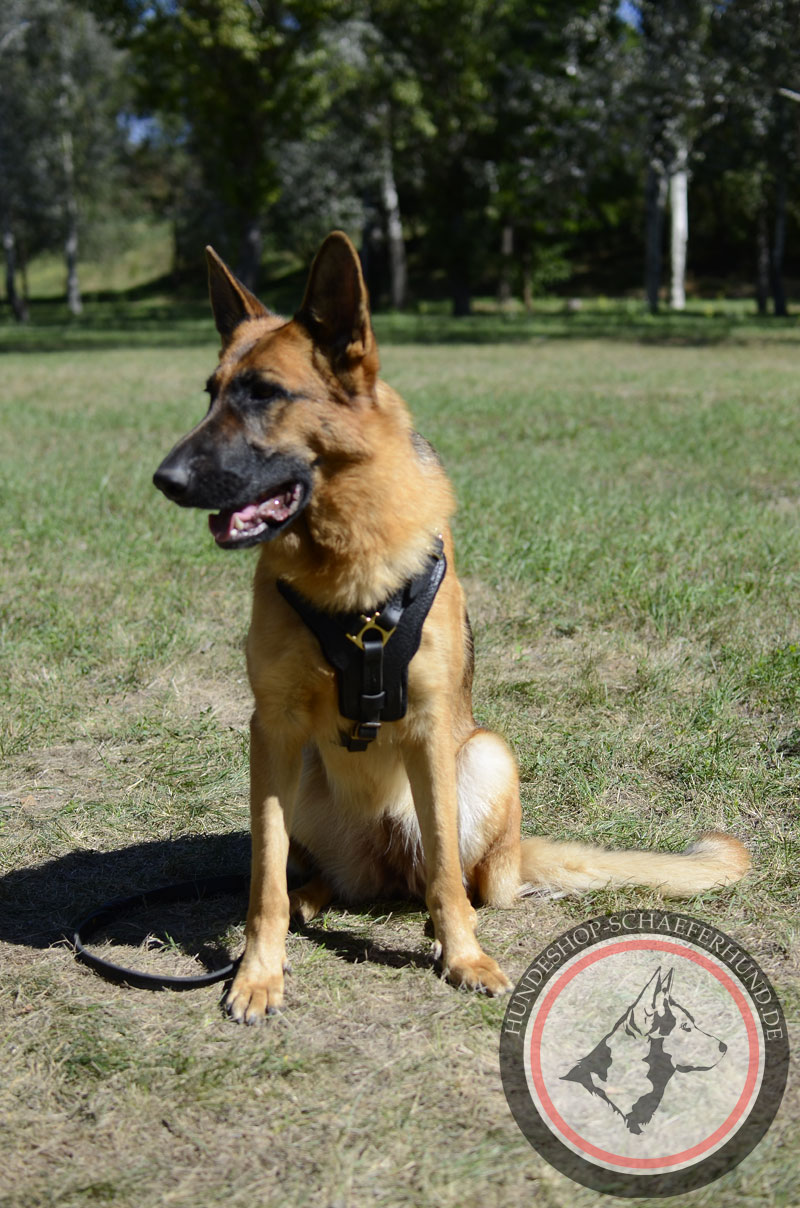 Lederhundegeschirr für Schäferhunde