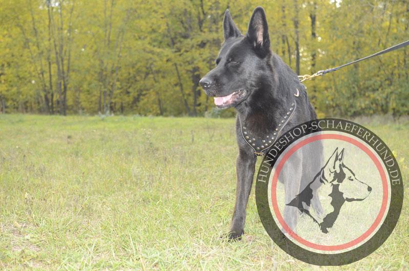 Extra starkes Hundegeschirr aus Leder für Schäferhund, gepolstert