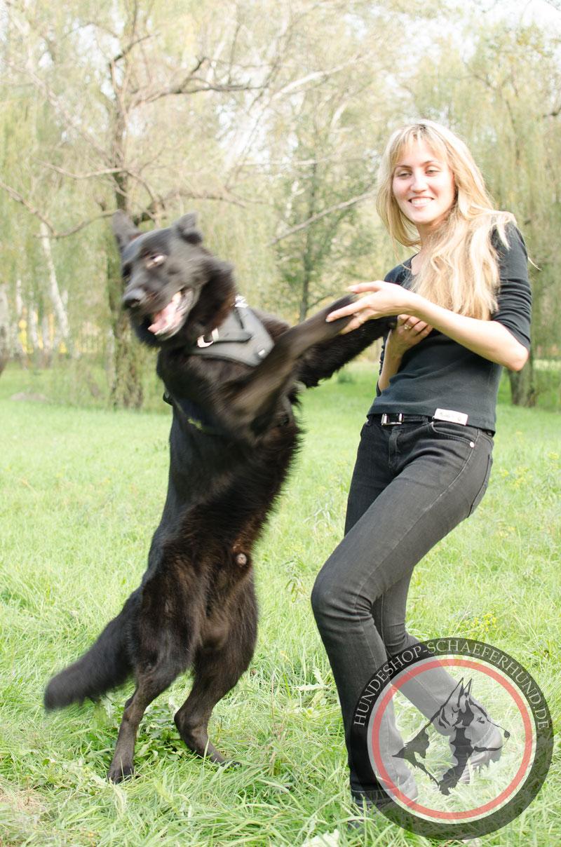 Leder Hundegeschirr, handgefertigt