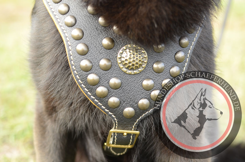 Schönes Ledergeschirr für Schäferhund, gepolstert