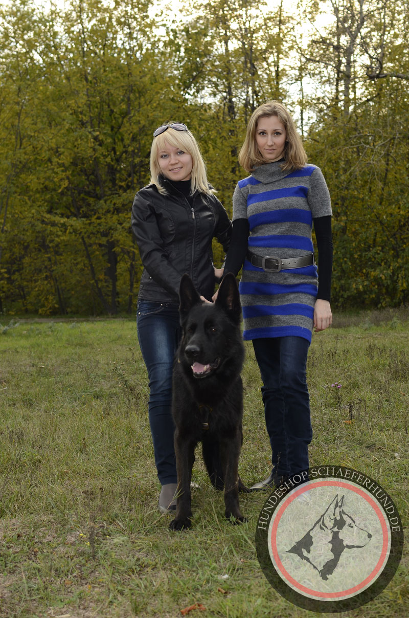robustes Leder Hundegeschirr
