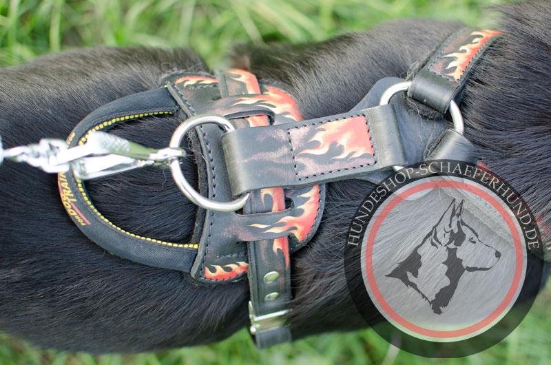 Hundegeschirr aus Leder, praktisch
