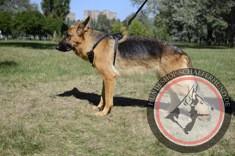 wertvolles Leder Hundegeschirr