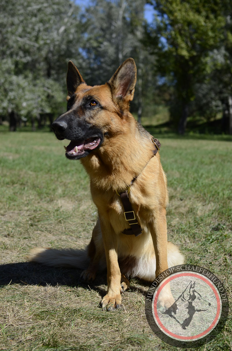 Hundegeschirr aus Leder, hochwertig