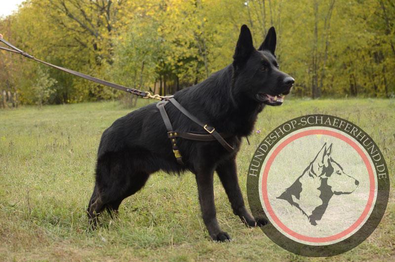 Leichtes Leder Zuggeschirr für Schäferhund-Rasse, gepolstert
