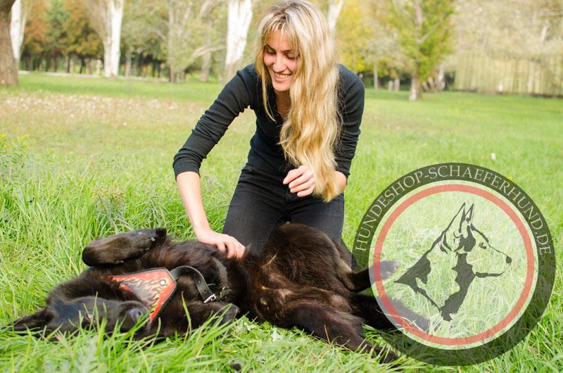 sicheres Hundegeschirr Leder
